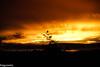 a Bird enjoying the sunset (aguswiss1) Tags: sun sky sunset weather nature autofocus