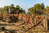 Waiting for the summer (PhredKH) Tags: abandoned bushes canonphotography crete fredknoxhooke fredkh greekislands photosbyphredkh phredkh splendid stavros travelphotography traveltocrete trees outdoor outdoorphotography outdoors