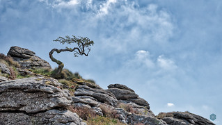 The Wicked Witch of Dartmoor
