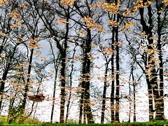 water trees (Mattijsje) Tags: reflection trees bomen bos woods watery water mirror spiegel spiegeling reflecties reflectie