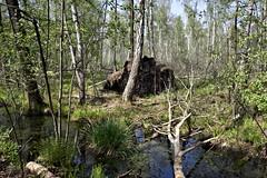IMGP14147 (Łukasz Z.) Tags: lubelskie rzeczpospolitapolska poleskiparknarodowy nationalpark sigma1750mmf28exdchsm pentaxk3
