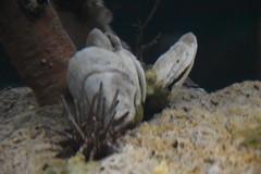 Sea Urchin and Shells (Adventurer Dustin Holmes) Tags: 2018 wondersofwildlife urchin seaurchin animal animals aquarium