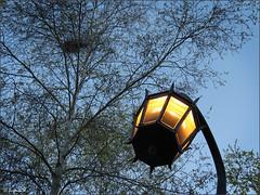 Garden light (Genie W.) Tags: torontomusicgarden musicgarden toronto spring trees canonpowershotsx40hs