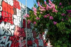 Painel (Centim) Tags: bh belohorizonte minasgerais mg brasil br cidade estado país sudeste capital continentesulamericano américadosul foto fotografia nikon d90 muro grafite arte