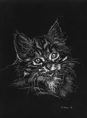 Nipper. (Davie Main) Tags: nipper nippermain nipperthecat portrait portraitofacat catportrait cat petcat 1976 seventies seventiescat scraperboard scraperboardcat johnmain johnkinnearmain