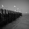 Domburg (Alex von Sachse) Tags: domburg netherlands zeeland seagull seagulls coast horizon sea seaview seascape northsea water flying monocrome blackandwhite nature landscape travel