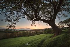 Tower - 13 May 2018 - 90 (ibriphotos) Tags: clackmannanshire alloa sunset skyline wallacemonument ochilhills clackmannan evening goldenhour sky sunsets