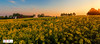 Panorama Zonsondergang Koolzaad Termunten (Reina Smallenbroek) Tags: reinasmallenbroek koolzaad rapeseed termunten sunset canonnederland zonsondergang field trees bomen boerderij farm sky lucht panorama