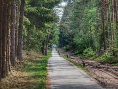 Sprokkelweg (sander_sloots) Tags: road weg sprokkelweg holten trees bomen fietspad cycletrack forest bos sallandseheuvelrug holterberg