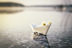 DREAMING (Melanie Martinu) Tags: reflection germany bavaria sigmaart canon light outdoor white bokeh landscape nature flowers lake water papership