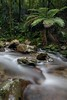 Rimutaka Forest Park (Argyle Fan) Tags: forest fern water nd filters canon newzealand nz northisland rimutaka river nature