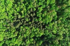 Greens (Matt Champlin) Tags: weekend life green nature landscape trees forest lush 2018 drone drones dji djiphantom4pro phantom4 phantom4pro spring springtime aerial beautiful woods protected