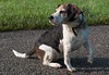 My dirty dog... (Marco van Beek) Tags: dirty dog animal beagle holland europe beautiful world nikon d5000 afs dx nikkor 18200mm f3556g ed vr ii nature