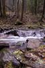 Black Mountain Salamander (Desmognathus welteri) (David A. Burkart) Tags: blackmountainbellcounty kentucky usasalamanderdesmognathuswelteri amphibian salamander herp nature appalachian cumberland mountain