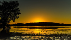 Sunrise Waterscape and Silhouettes (Merrillie) Tags: daybreak woywoy landscape nature australia foreshore newsouthwales earlymorning nsw brisbanewater morning water coastal sunrise outdoors waterscape sky centralcoast bay dawn