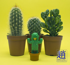 Master of Disguise (mikechiu86) Tags: lego cactus yellow green flowerpot flower hiding sleepy minifigure collectible series toy toys kids