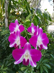 The homeowners had orchids growing in their yard; amazing!