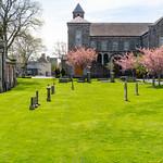 CHURCH OF THE SACRED HEART [ARBOUR HILL DUBLIN]-138978 thumbnail