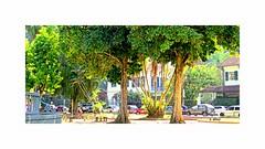 Praça Afonso Viseu - Tijuca - Rio de Janeiro (o.dirce) Tags: tijuca praça jardim casas plantas odirce praçaafonsoviseu