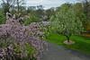 From my window (The Julia) Tags: spring bloom tree garden pink green cherryblossom cherry pear sakura landscape