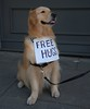 Get A Free Hug (Scott 97006) Tags: dog animal canine hugger hug goldenretriever cute adorable irresistible