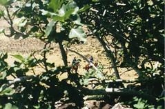 Guardaparques (photo du chaleins) Tags: photo photography analoga analog analogphotography film fotografia foto 200asa rollo fotografiaanaloga zenit zenit11 rapanui easterisland