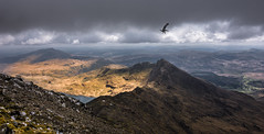 photobomber (Phil-Gregory) Tags: scenicsnotjustlandscapes snow snowdonia snowdon seagull nikon naturephotography naturalphotography national nationalpark nature naturalphotograph d7200 wideangle ultrawide mountain sky clouds cloudscape ridge ngc wales uk