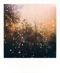 untitled-1 (dvlmnkillatron) Tags: film polaroid polaroidoriginals polaroidonestep2 instantfilm analog square
