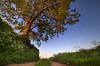 """ LIGHT UP "" (Wiffsmiff23) Tags: lonetree sunrise southwales farm path pathway field light golden cefnmably"