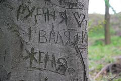 Ботанічний сад імені Гришка Буковий гай InterNetri  Ukraine 100