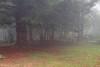 2516  Sta. Fe del Montseny con niebla, Barcelona (Ricard Gabarrús) Tags: niebla rural rustico arboles ricgaba olympus ricardgabarrus