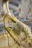 1329 Val de Loire en Août 2017 - Tours, la Cathédrale (paspog) Tags: tours france valdeloire cathédrale cathedral kathedral 2017 gargouille gargoyles