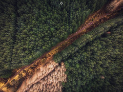 Forest Flight (Augmented Reality Images (Getty Contributor)) Tags: woodland trees drone landscape scotland path forest perthshire flying track nature polarprofilters aerialphotography mavicair dji unitedkingdom gb