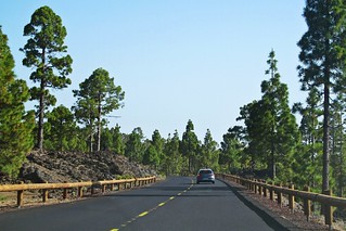 road in pine forest :)