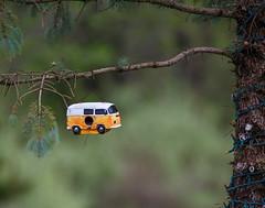 Living in your VW van (dshoning) Tags: odc vw van tree birdhouse