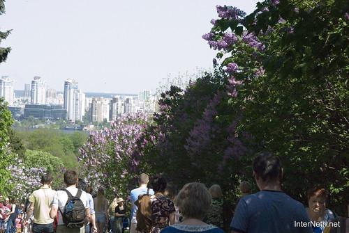 Сад бузків Ботанічний сад імені Гришка InterNetri  Ukraine 06