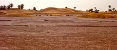 Sahara (KRAMEN) Tags: sáhara desert desierto arena sand dunas palmeras palmtree tierra oulad edriss landscape palm trees
