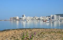 Ibiza 42 (Eloy Rodríguez (+ 6.000.000 views)) Tags: cormoran cormoranes cormorans santantonideportmany ibiza calas playas beachs mar sea puerto nature naturaleza bird eivissa eloyrodriguez potd:country=es