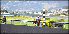 Cozze Kid - May 4, 2018 Maiden Special Weight @ Golden Gate Fields (billypoonphotos) Tags: tapeta golden gate fields berkeley jockey horse racing thoroughbred dirt track photo picture photography photographer billypoon billypoonphotos nikon d5500 18140mm nikkor news stretch win finish synthetic race 18140 mm sign sport stadium building grass people road cozze kid shanghai chestnut filly 2018 gomez alejandro tree wood