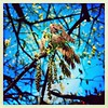 Leafing. #collegepark #maryland #iPhone #commute #sidewalk #roadside #iPhonemacro #macro  #flower #flowersofinstagram (Kindle Girl) Tags: roadside collegepark maryland iphone commute sidewalk iphonemacro macro flower flowersofinstagram