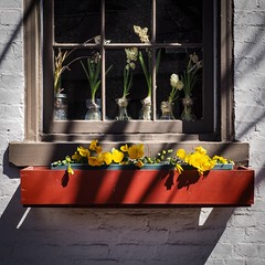 Outside & In (tim.perdue) Tags: outside inside out window flowers plants floral box color multicolored colorful pansy hyacinth bulb annual perrenial light shadow wall sunlight glass vase windowsill brick wood frame
