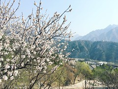 Spring on the mountain (bambooland) Tags: beijing china peachblossoms asia oriental travel traveling
