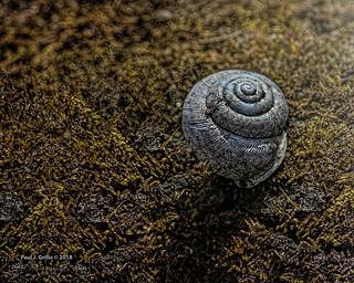 A Dead Snail's Pace