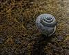 A Dead Snail's Pace (jackalope22) Tags: snail pace dead log macro snails