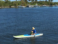 Roxie's Lucy paddleboarding!