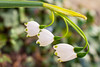 My garden (Maria Eklind) Tags: dof bokeh colorful malmö sweden blommor closeup flowers depthoffield skånelän sverige se