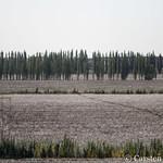 Between Turfan and Dunhuang thumbnail