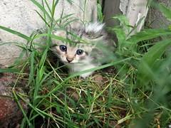 Kittens! (Somersaulting Giraffe) Tags: outdoor cat kitten rain plants grass ngc eyes cute adorable cold wet fur fluffy