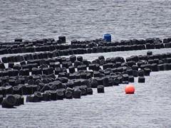 0266 Mussel farming in Loch Leven (Andy - Busy Bob) Tags: bbb bouys farming fff floats lake lll lochleven mmm musselfarm sealoch seawater sss tidal ttt water www holsday04