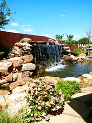 2018-05-21_07-47-09 (lillypotpie) Tags: waterfall water plants rocks pond gardencenter
